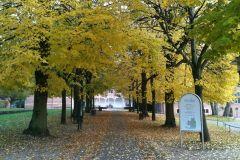 Schloss Reinbek im Herbst