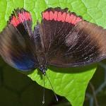 Schmetterlinge-1