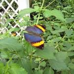 Schmetterlinge-10