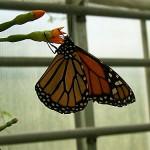 Schmetterlinge-11