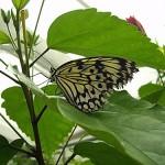 Schmetterlinge-12