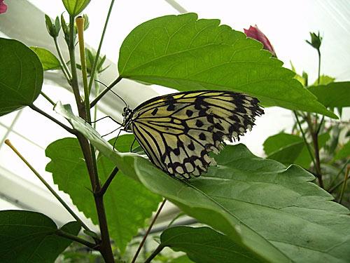 Garten der Schmetterlinge in Friedrichsruh