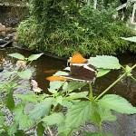 Schmetterlinge-13