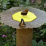 Schmetterlinge-14