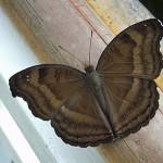 Schmetterlinge-2