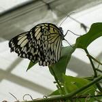 Schmetterlinge-3