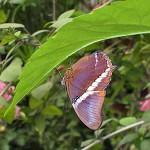 Schmetterlinge-4
