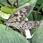 Schmetterlinge-7