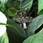 Schmetterlinge-8