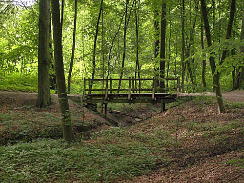 Wildkoppel - Wald in Reinbek