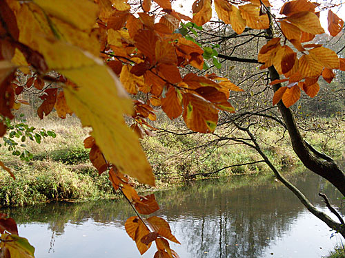 Bille bei Reinbek im Herbst