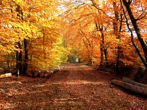 Herbstwald - Reinbek Herbst Bilder