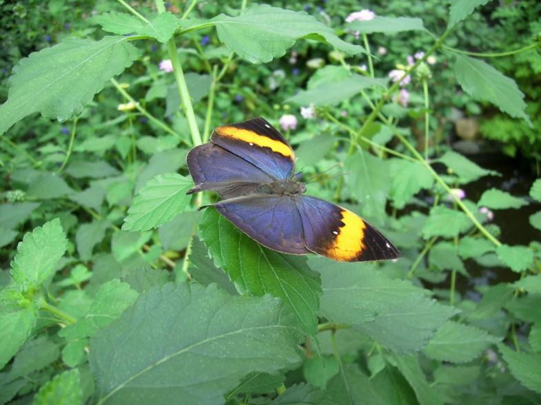 Schmetterlingsgarten Friedrichsruh
