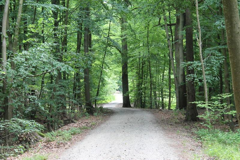 Wald Reinbek im Sommer