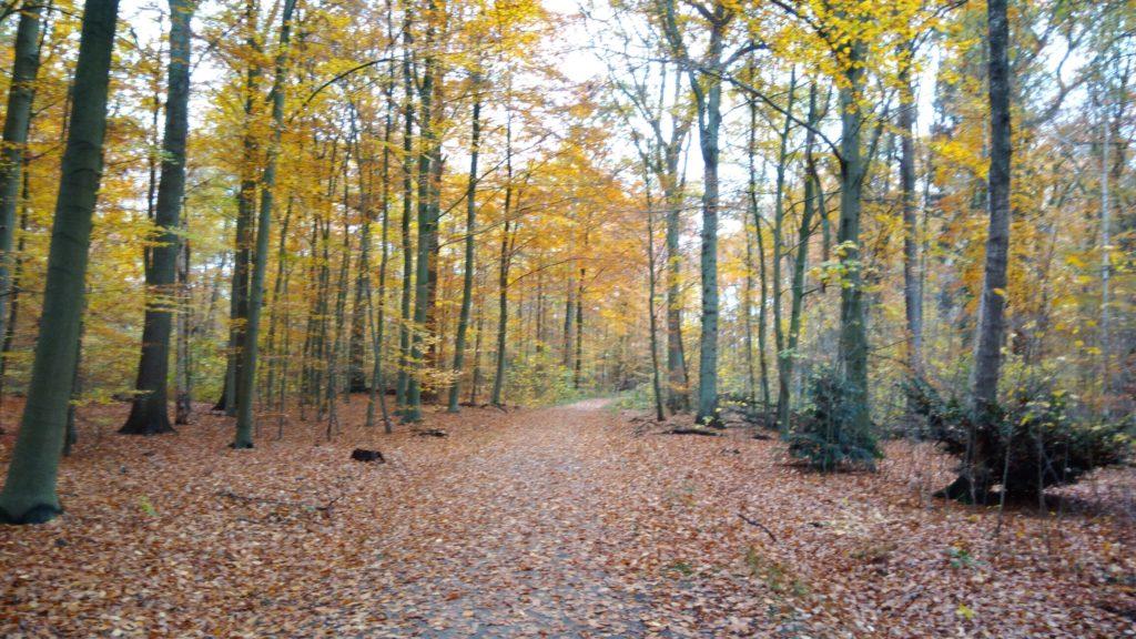 Herbstwald in Reinbek