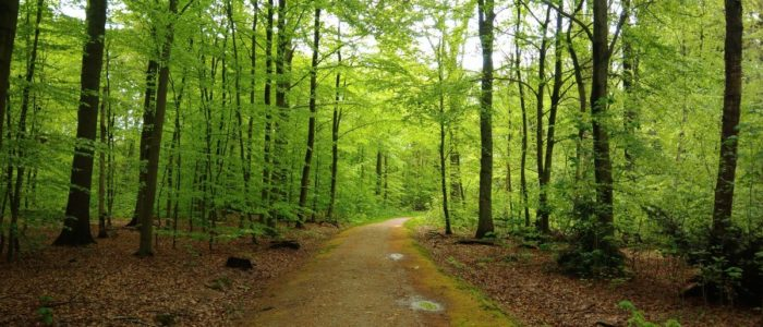 Frühling Wald Reinbek