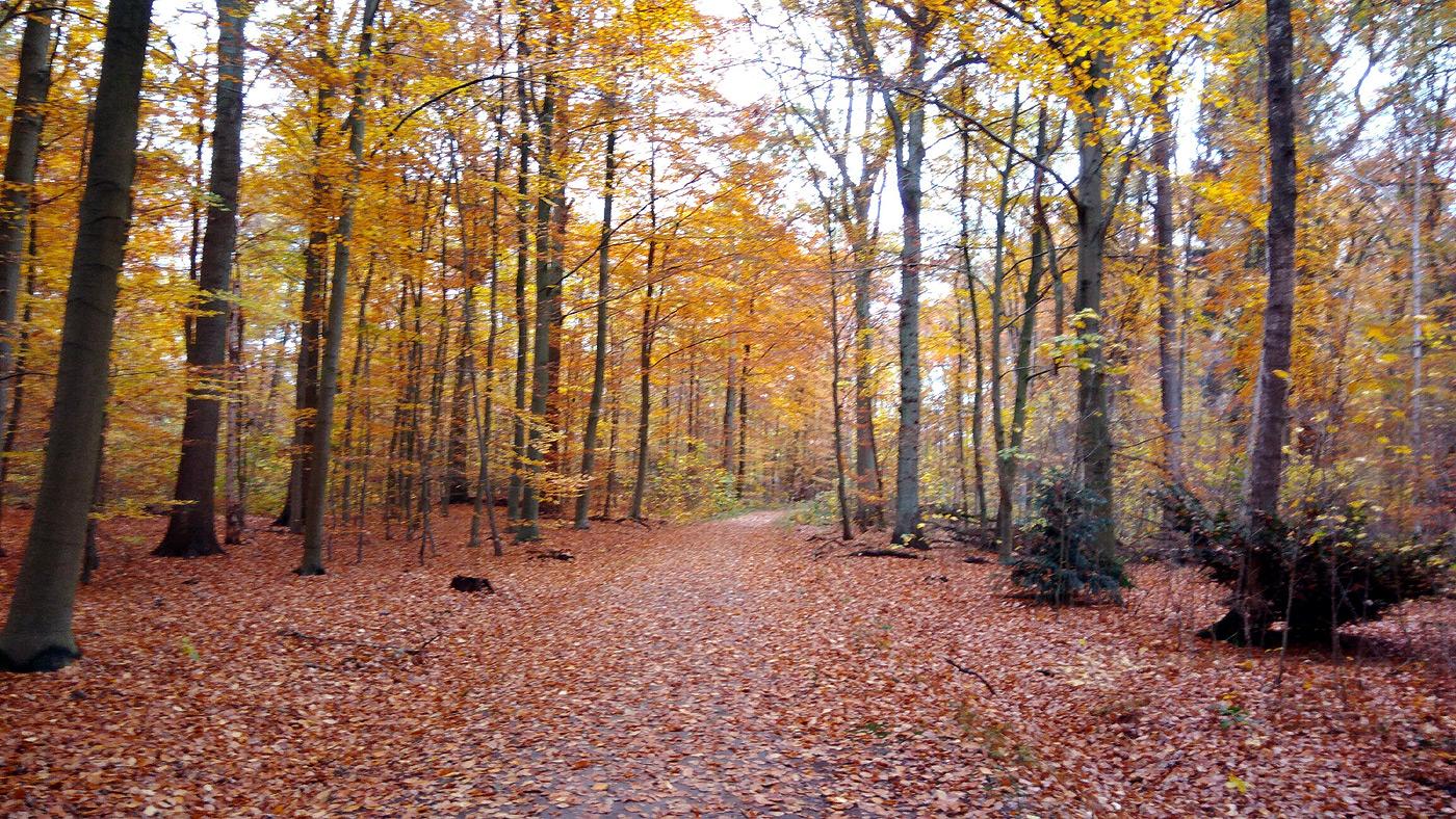 Herbst: Vorwerksbusch Wald in Reinbek